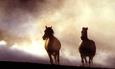two_wild_horses_in_nature_running_800x600_wallpaper